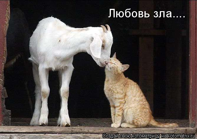 Котоматрица: Любовь зла....