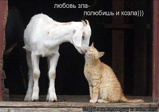 Котоматрица: любовь зла- полюбишь и козла)))
