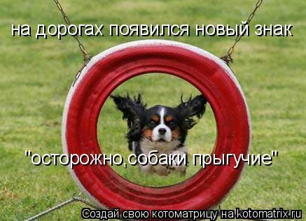 """Котоматрица: на дорогах появился новый знак """"осторожно,собаки прыгучие"""""""