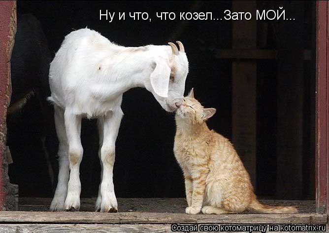Котоматрица: Ну и что, что козел...Зато МОЙ...