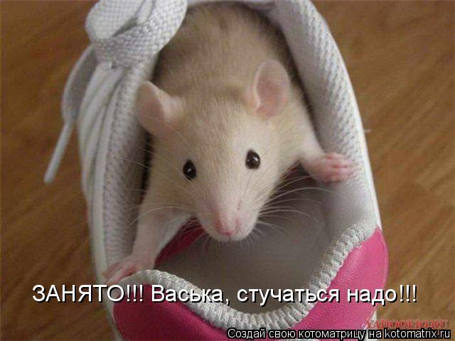 Котоматрица: ЗАНЯТО!!! Васька, стучаться надо!!!