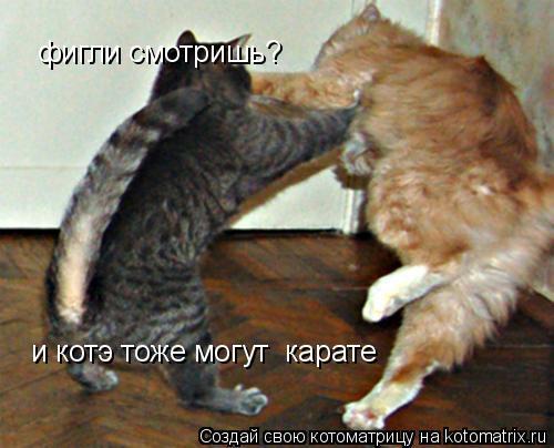 Котоматрица: и котэ тоже могут  карате фигли смотришь?