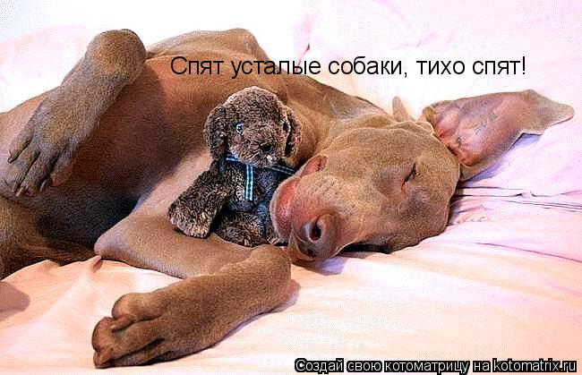 Котоматрица: Спят усталые собаки, тихо спят!