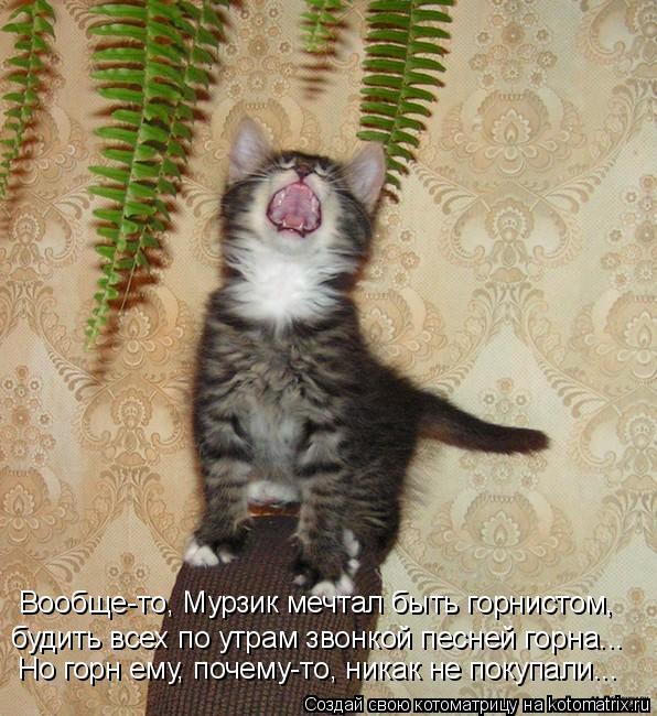 Котоматрица: Вообще-то, Мурзик мечтал быть горнистом, будить всех по утрам звонкой песней горна... Но горн ему, почему-то, никак не покупали...