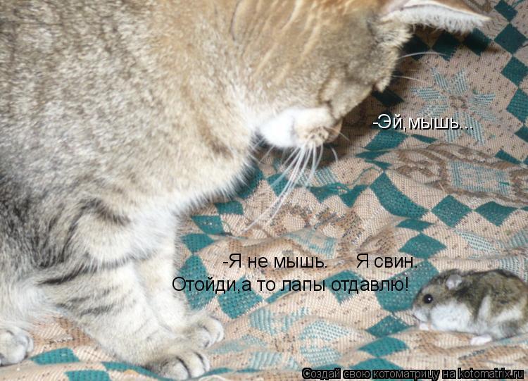 Котоматрица: -Эй,мышь... -Я не мышь.     Я свин. Отойди,а то лапы отдавлю!