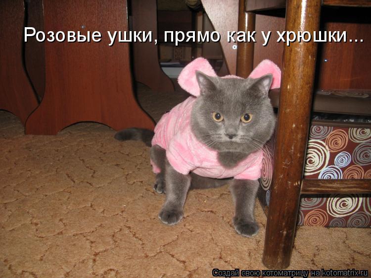Котоматрица: Розовые ушки, прямо как у хрюшки...