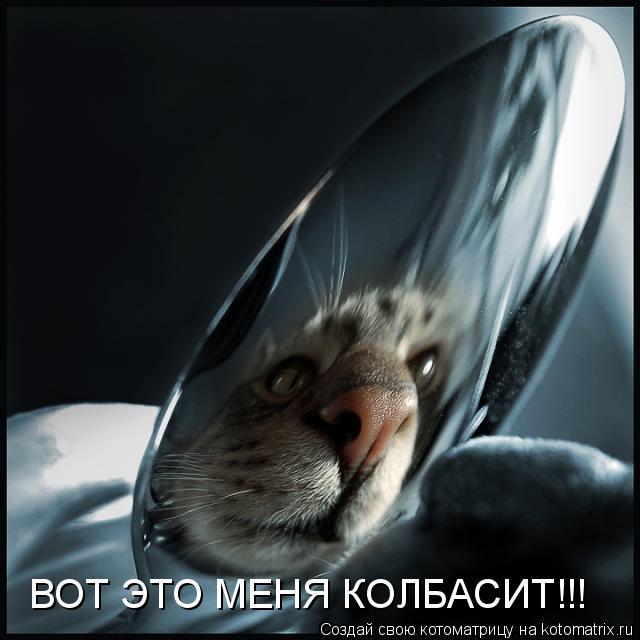 Котоматрица: ВОТ ЭТО МЕНЯ КОЛБАСИТ!!!