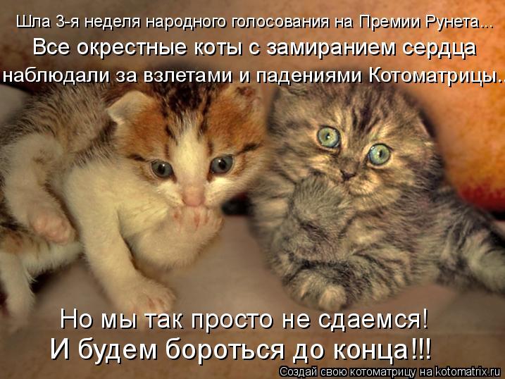Котоматрица: Шла 3-я неделя народного голосования на Премии Рунета...   Все окрестные коты с замиранием сердца  наблюдали за взлетами и падениями Котоматр