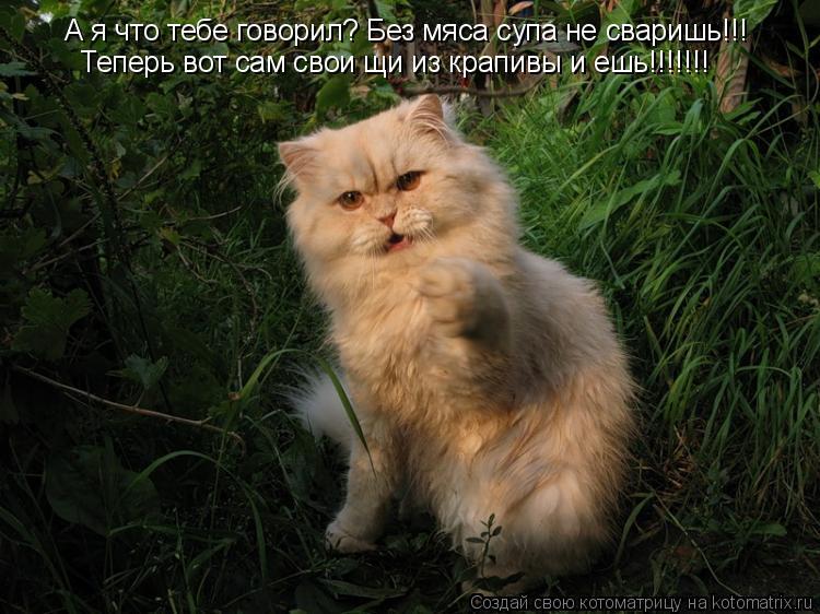 Котоматрица: А я что тебе говорил? Без мяса супа не сваришь!!! Теперь вот сам свои щи из крапивы и ешь!!!!!!!