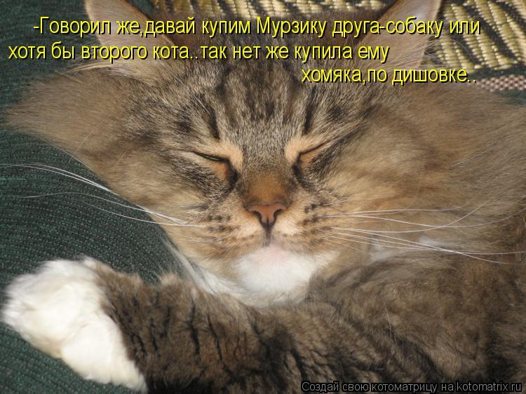 Котоматрица: -Говорил же,давай купим Мурзику друга-собаку или  хотя бы второго кота..так нет же купила ему  хомяка,по дишовке..