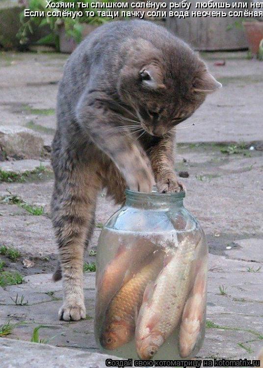 Котоматрица: Хозяин ты слишком солёную рыбу  любишь или нет.                                                                                         Если солёную т