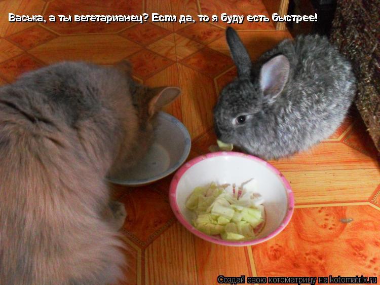 Котоматрица: Васька, а ты вегетарианец? Если да, то я буду есть быстрее! Васька, а ты вегетарианец? Если да, то я буду есть быстрее! Васька, а ты вегетариане
