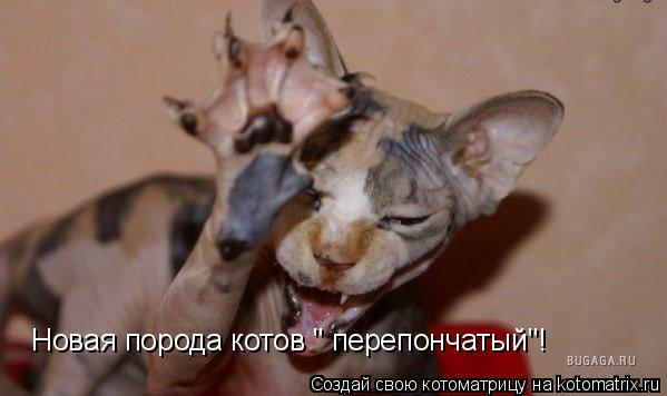 """Котоматрица: Новая порода котов """" перепончатый""""!"""