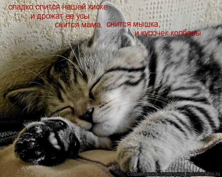 Котоматрица: сладко спится нашей киске и дрожат ее усы снится мама, снится мышка, и кусочек колбасы