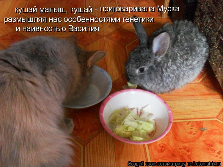 Котоматрица: кушай малыш, кушай - приговаривала Мурка размышляя нас особенностями генетики и наивностью Василия