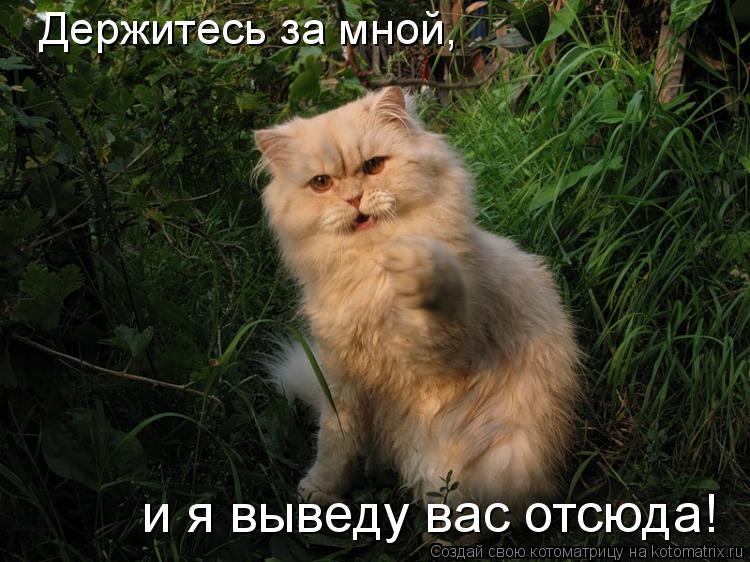 Котоматрица: Держитесь за мной,  и я выведу вас отсюда!