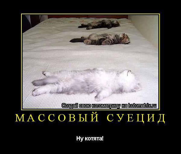Котоматрица: Массовый суецид Ну котята!