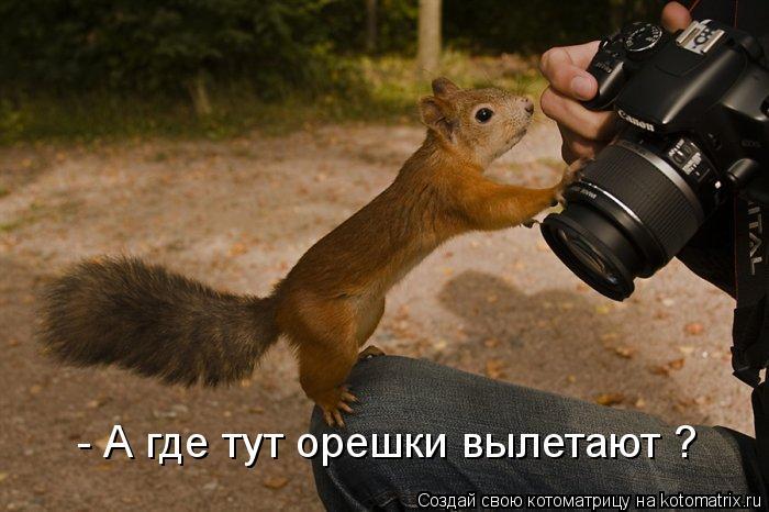 Котоматрица: - А где тут орешки вылетают ?