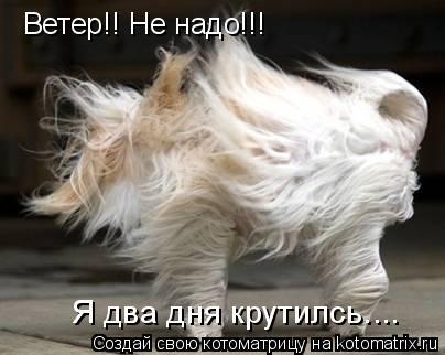 Котоматрица: Ветер!! Не надо!!! Я два дня крутилсь....