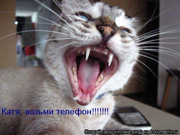 Котоматрица: Катя, возьми телефон!!!!!!!