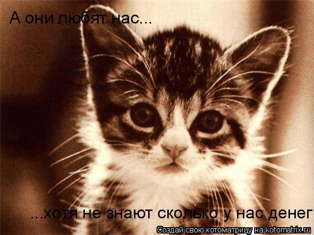 Котоматрица: ...хотя не знают сколько у нас денег А они любят нас...