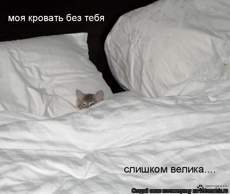 Котоматрица: моя кровать без тебя слишком велика....