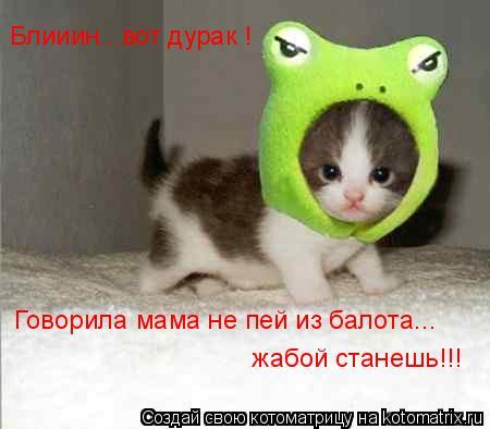 Котоматрица: Блииин...вот дурак !  Говорила мама не пей из балота... жабой станешь!!!