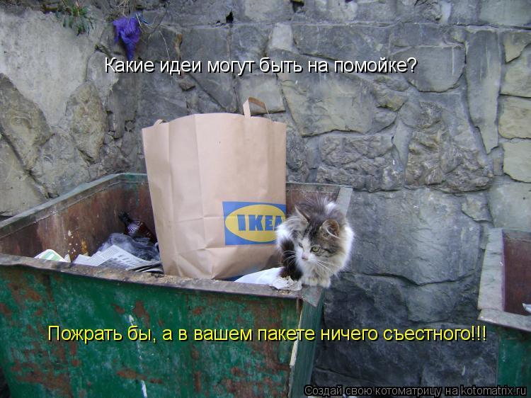 Котоматрица: Какие идеи могут быть на помойке? Пожрать бы, а в вашем пакете ничего съестного!!!