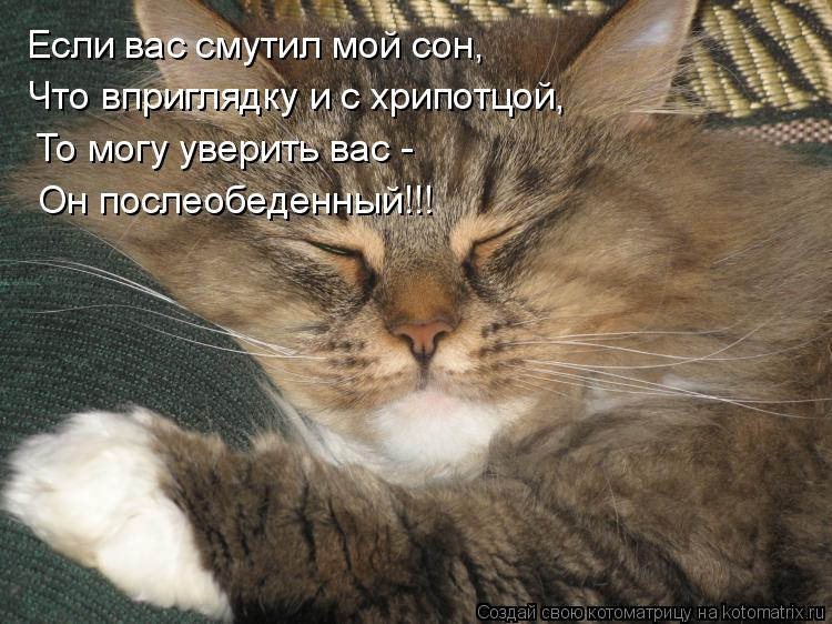 Котоматрица: Если вас смутил мой сон, Что вприглядку и с хрипотцой, То могу уверить вас - Он послеобеденный!!!