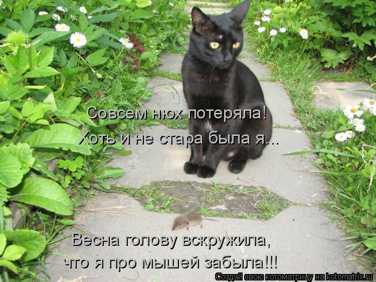 Котоматрица: Совсем нюх потеряла! Хоть и не стара была я... Весна голову вскружила, что я про мышей забыла!!!