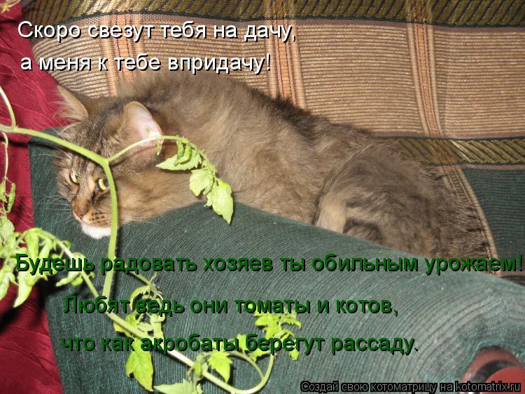 Котоматрица: Скоро свезут тебя на дачу, а меня к тебе впридачу! Будешь радовать хозяев ты обильным урожаем! Любят ведь они томаты и котов, что как акробат