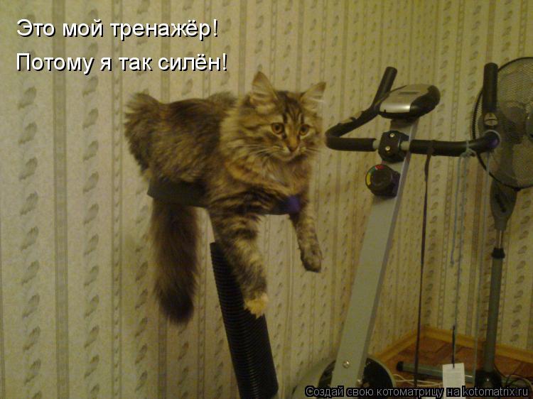 Котоматрица: Это мой тренажёр! Потому я так силён!