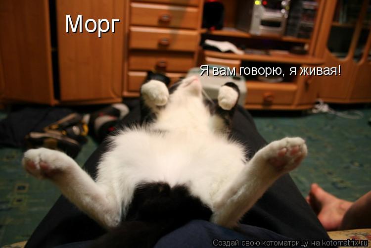 Котоматрица: Морг Я вам говорю, я живая!