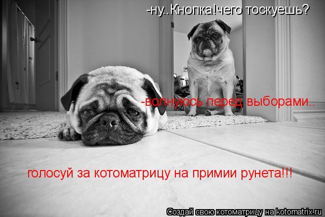 Котоматрица: -ну..Кнопка!чего тоскуешь? -волнуюсь перед выборами.. голосуй за котоматрицу на примии рунета!!!
