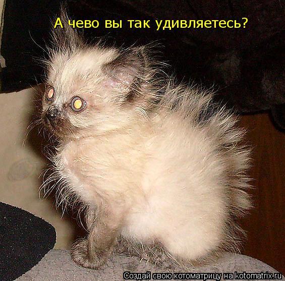 Котоматрица: А чево вы так удивляетесь? А чево вы так удивляетесь?  Я ведь кот Пушного!