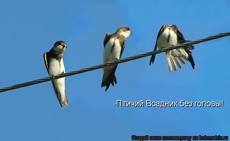 Котоматрица: -Птичий Всадник без головы!