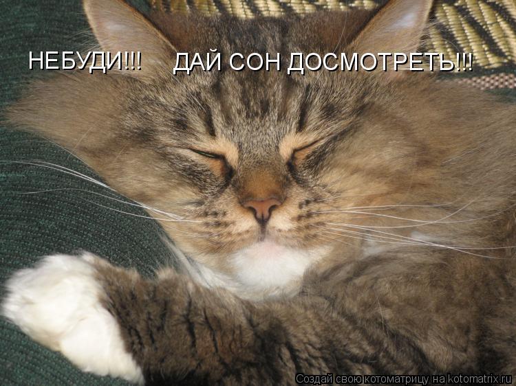 Котоматрица: НЕБУДИ!!! ДАЙ СОН ДОСМОТРЕТЬ!!!