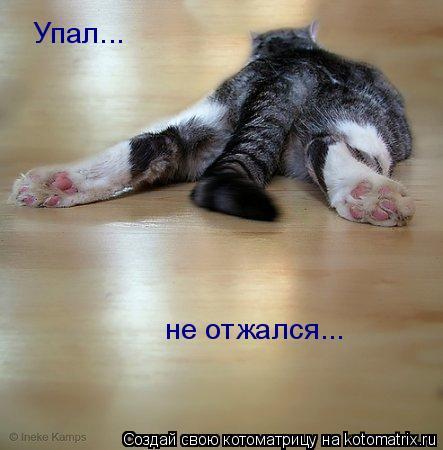 Котоматрица: Упал... не отжался...