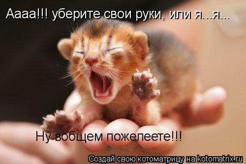 Котоматрица: Аааа!!! уберите свои руки, или я...я... Ну вобщем пожелеете!!!