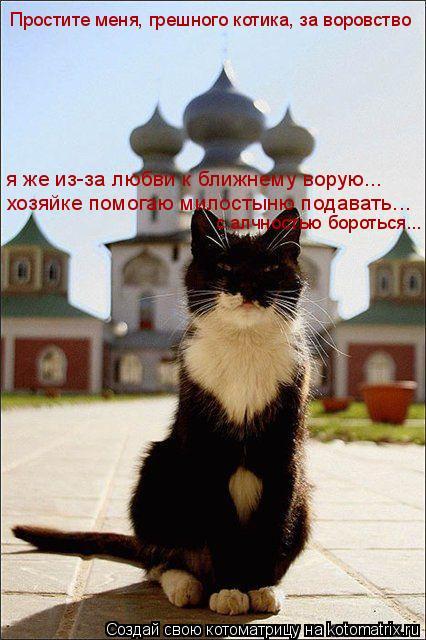 Котоматрица: я же из-за любви к ближнему ворую... хозяйке помогаю милостыню подавать... Простите меня, грешного котика, за воровство с алчностью бороться...
