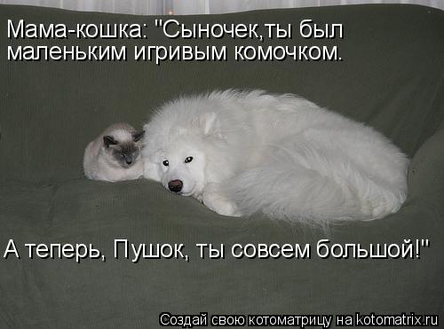 """Котоматрица: Мама-кошка: """"Сыночек,ты был  маленьким игривым комочком. А теперь, Пушок, ты совсем большой!"""""""