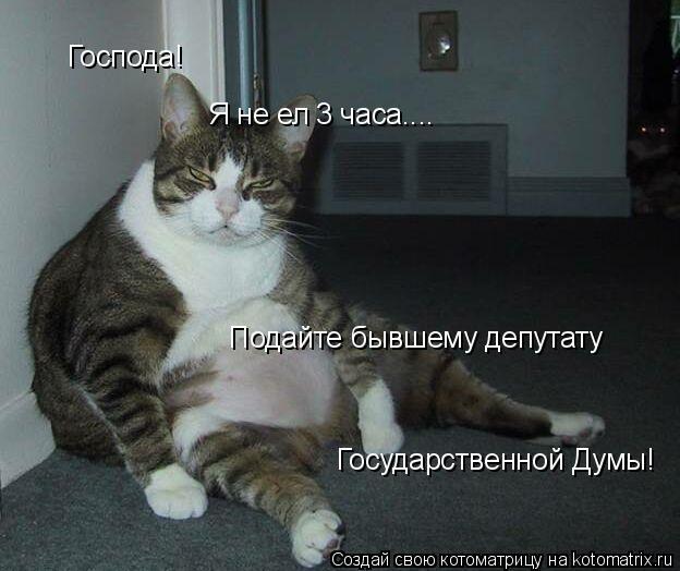 Котоматрица: Господа! Я не ел 3 часа.... Подайте бывшему депутату Государственной Думы!