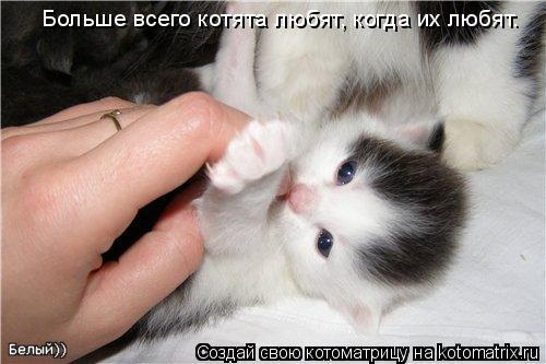 Котоматрица: Больше всего котята любят, когда их любят.
