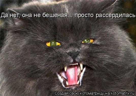 Котоматрица: Да нет, она не бешеная... просто рассердилась...