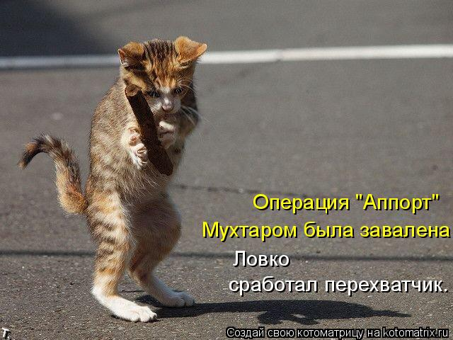 "Котоматрица: Операция ""Аппорт"" Мухтаром была завалена. Ловко  сработал перехватчик."