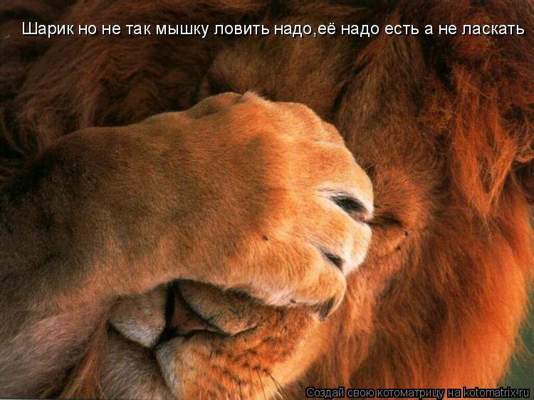 Котоматрица: Шарик но не так мышку ловить надо,её надо есть а не ласкать
