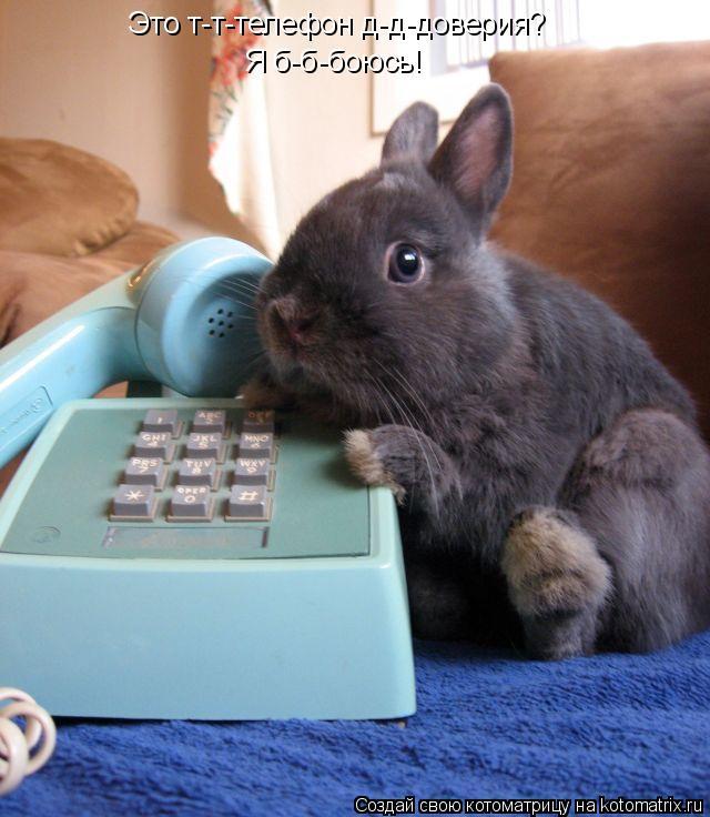 Котоматрица: Это т-т-телефон д-д-доверия? Я б-б-боюсь!