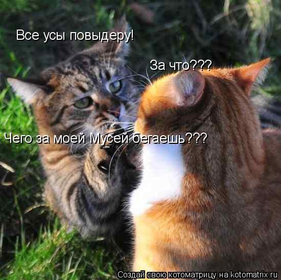 Котоматрица: Все усы повыдеру! За что??? Чего за моей Мусей бегаешь???
