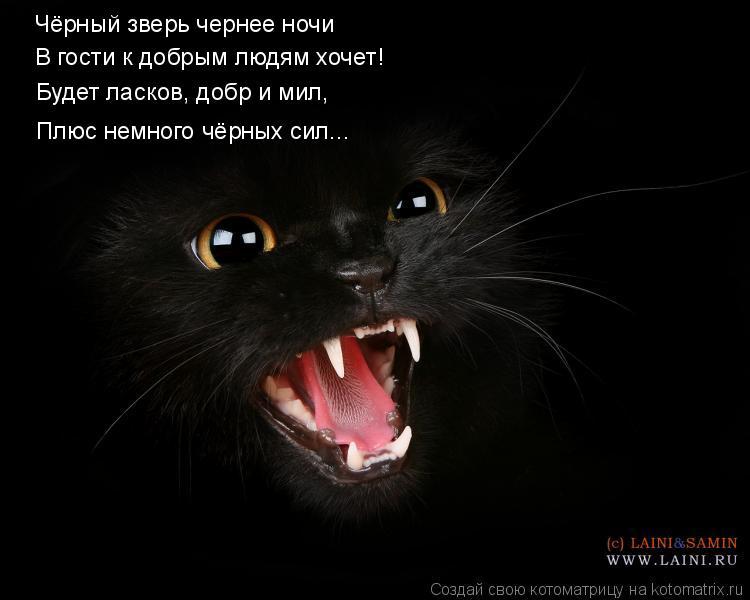 Котоматрица: Чёрный зверь чернее ночи В гости к добрым людям хочет! Будет ласков, добр и мил, Плюс немного чёрных сил...