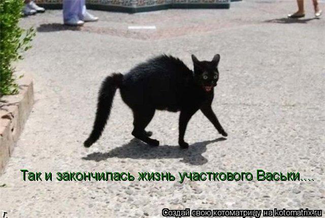 Котоматрица: Так и закончилась жизнь участкового Васьки....